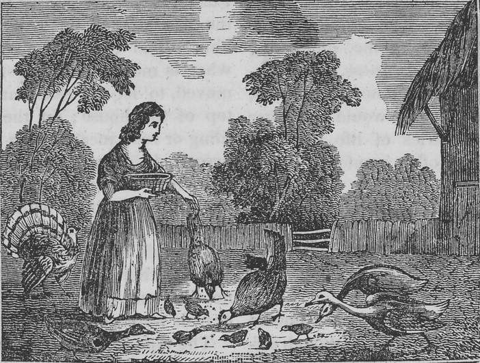 In the late eighteenth and nineteenth centuries, farmwomen in the East and Midwest commonly raised turkeys. To raise hearty birds, they frequently crossed wild and domestic strains by finding the eggs of wild turkeys and raising the birds with their domestic flocks. This illustration, which appeared in an 1833 children's magazine, displays the popular association of farmwomen with the poultry yard. Credit: Parley's Magazine for Children and Youth, Saturday, October 12, 1833, 42, Special Collections, University of Virginia Library. Used with permission
