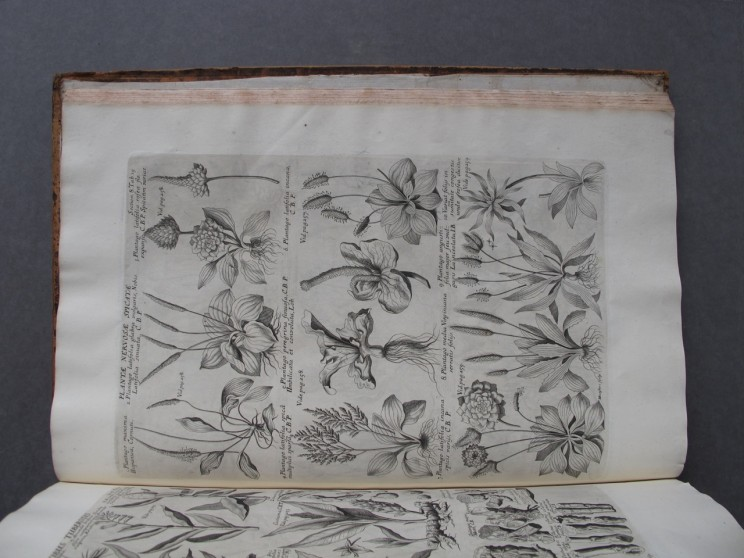 By permission of the Codrington Library, All Souls College, Oxford: A page from part three of Morison's History of Plants, showing a plate prepared by Michael Burghers