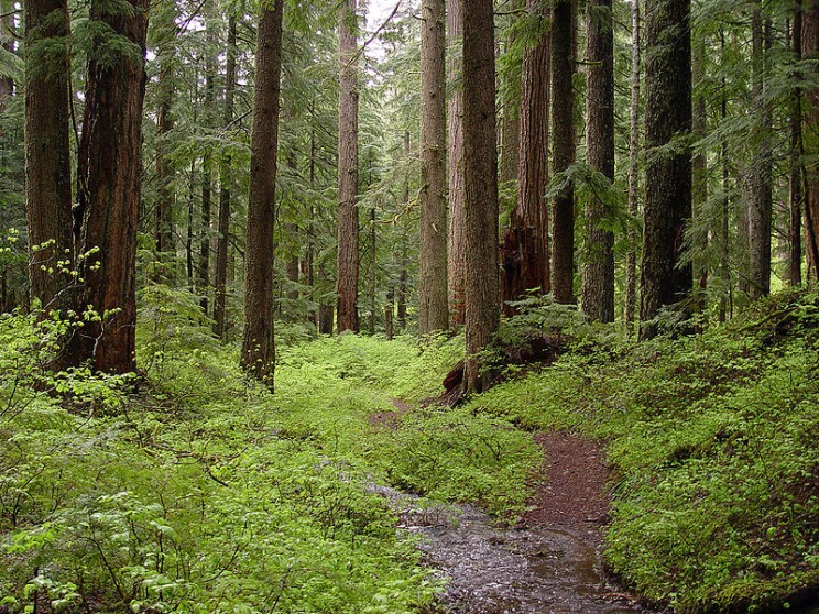 800px-Creek_and_old-growth_forest-Larch_Mountain