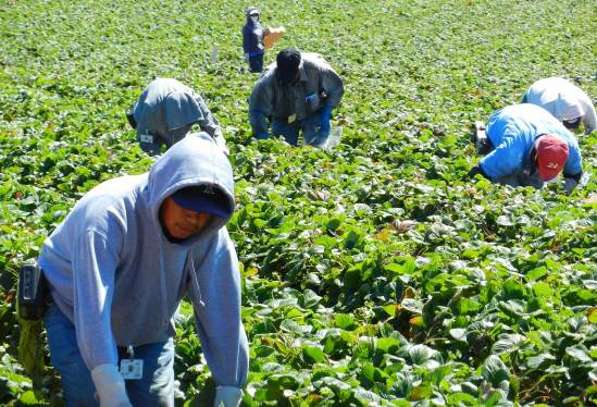 Migrant farm workers. Image by Jeffrey M. Perloff. Used with permission.