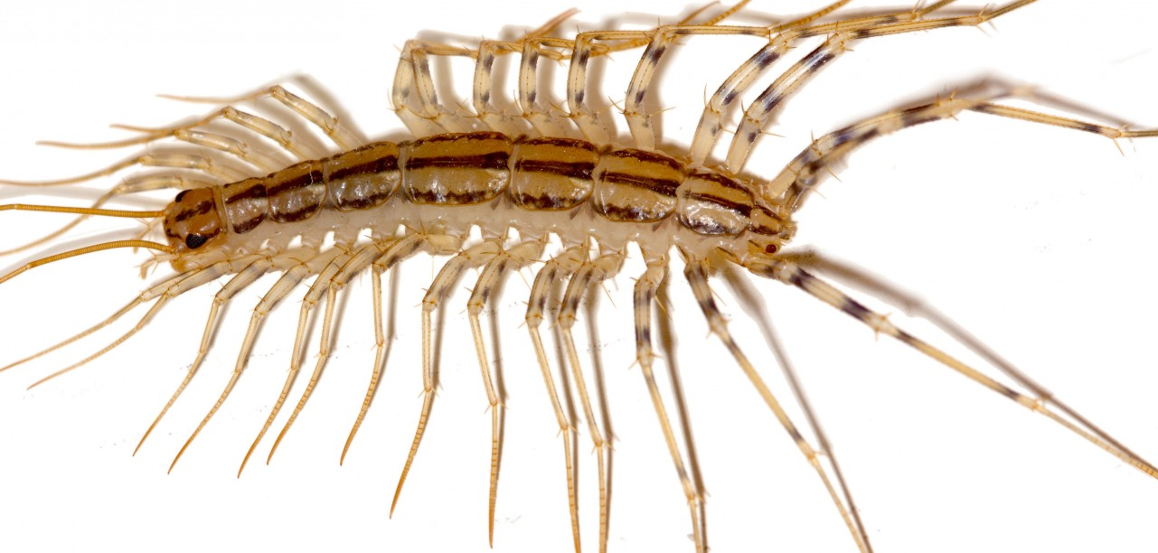 What Are Those Terrifying Centipede Like Things