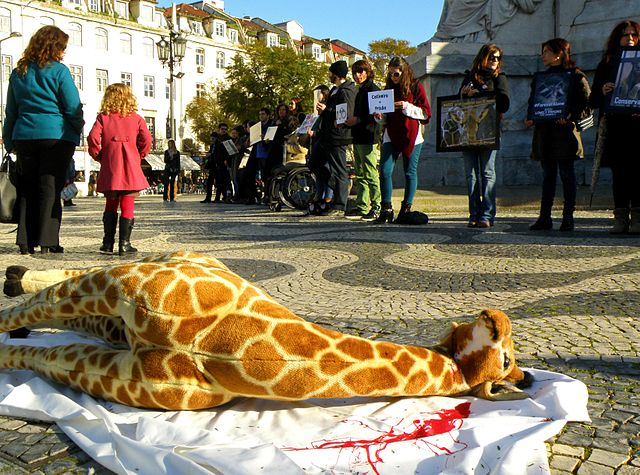 A stuffed giraffe, representing Marius, at a protest against zoos and the confinement of animals in Lisbon, 2014