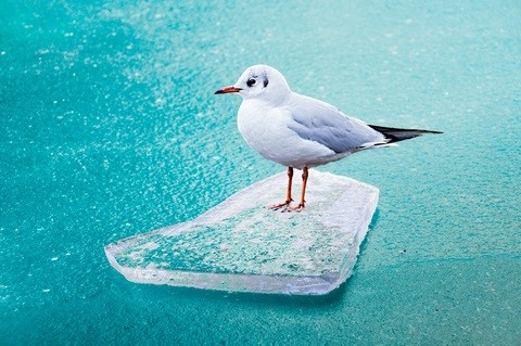Seagull via Dreamstime, courtesy of author.