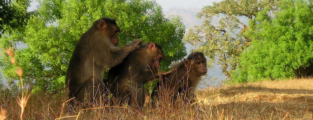 berber-monkeys-299_12802