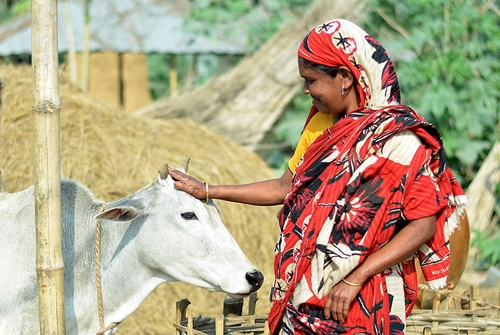 womanwithcow
