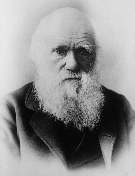 Darwin himself dealt with some of the problems which arose from his evolutionary theory. Others have been the subject of later research. Image: 'Darwin' via Pixabay