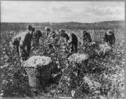 African American cotton pickers at work in a Southern field.  Public domain via Library of Congress.
