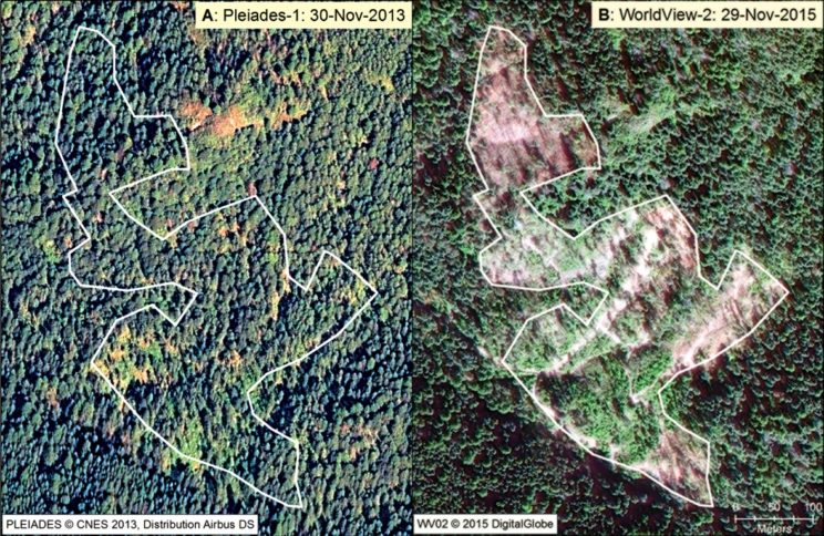 Image from 'Illegal logging of 10 hectares of forest in the Sierra Chincua monarch butterfly overwintering area in Mexico' in American Entomologist