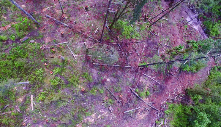 This drone image from January 2016 shows a clear-cut area full of tree stumps and logging debris. Illegal logging of 10 hectares of forest in the Sierra Chincua monarch butterfly overwintering area in Mexico' in American Entomologist.