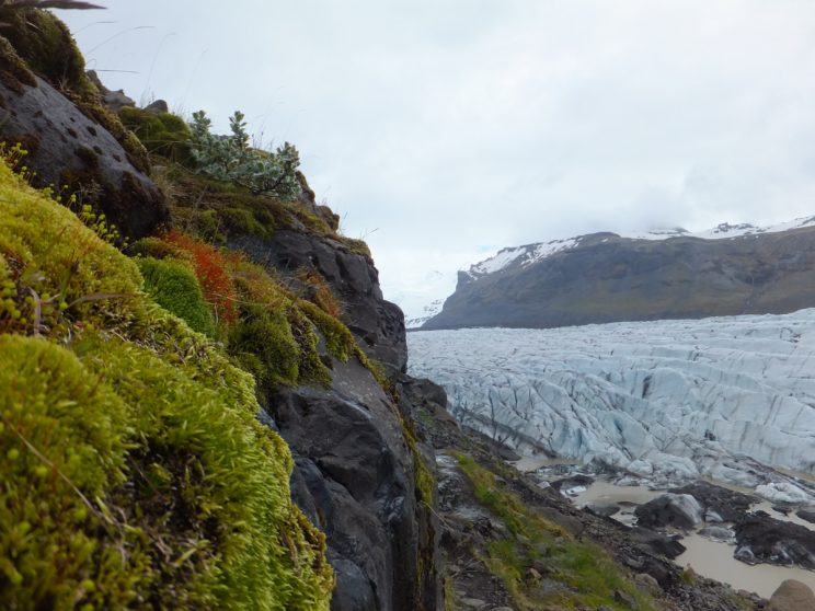 Svínafellsjökkull Glacier sliding past a mossy mountain by Corinne G. Dempsey. Used with permission of photographer.