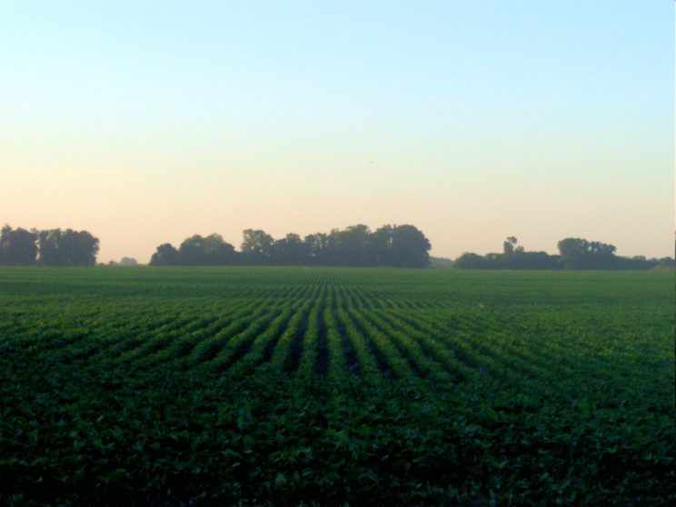 Soybean field in the Proivince of Buenos Aires, Argentina