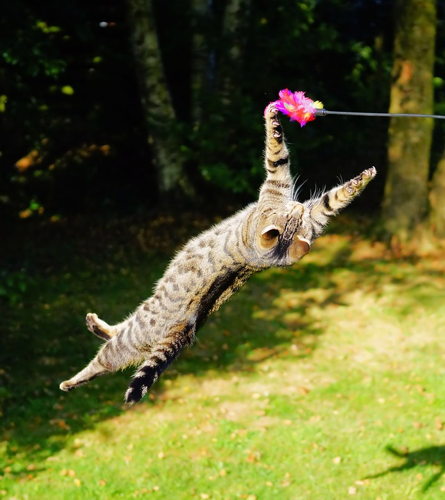 Who said that this cat won't jump? Just try to make it happy, as Tom Sawyer did, who fed Peter his aunt's medicine.
