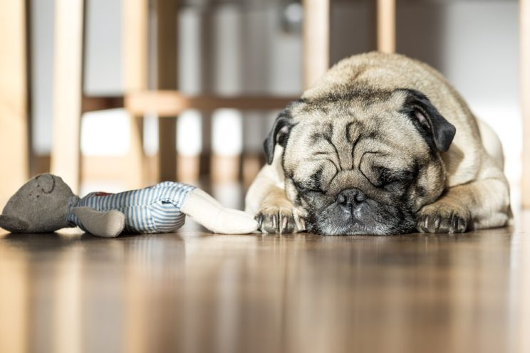 Let a sleeping dog lie: it may be lying to bark.